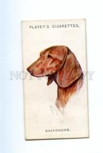 166936 DACHSHUND by WARDLE Player CIGARETTE card ADVERTISING
