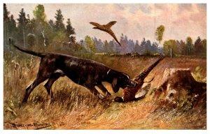 Dog  Retriving Pheasant