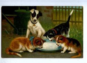 185500 JACK RUSSELL TERRIER & KITTENS Milk Vintage Color PC