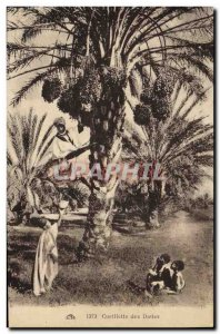 Old Postcard Palm dates Palm Tree Picking
