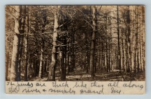 RPPC Hanover New Hampshire, Cathedral Pines, Real Photo Vintage c1906 Postcard