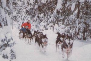 Dog Sled Team , Laurentides , Quebec , Canada , 50-70s