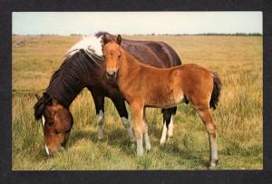 MA Fleur De Lis Shop Hamilton Mass Massachusetts Postcard Horses Horse PC