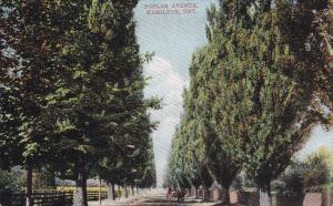 HAMILTON, Ontario, Canada, PU-1906; Poplar Avenue