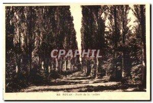Old Postcard Royan Foret de la Coubre