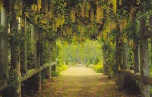 Historic Gardens, Golden Chain Arbour, Annapolis Royal, Nova Scotia, Canada, ...