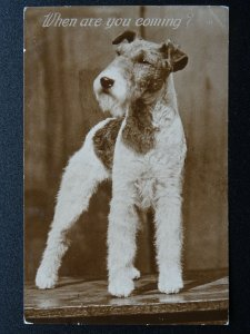 When Are You Coming? WIRED HAIR FOX TERRIER Dog Breed c1930s RP Postcard