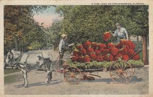 Fine Load of strawberries , Florida , 1910s
