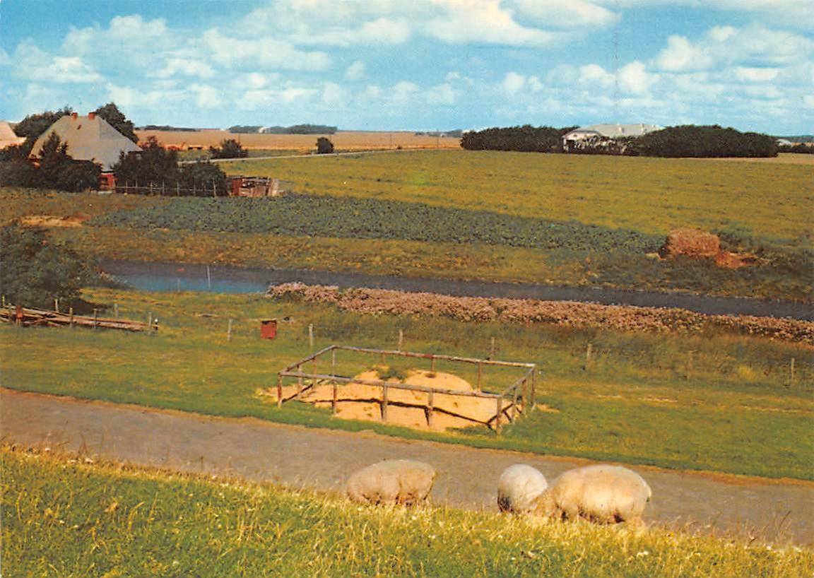 Soenke Nissen Koog River Sheeps House Haus / HipPostcard