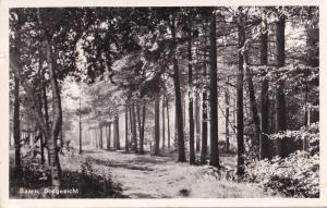Bosgezicht Forest Baarn Dutch Real Photo Postcard