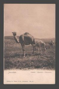 095084 ITALY Jerusalem Camels Vintage PC