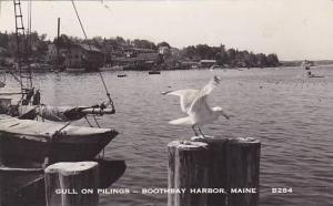 Maine Boothbay Harbor Gull On Pilings Real Photo RPPC