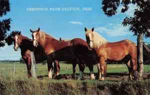 Grafton Ohio~Horses~1960 Postcard