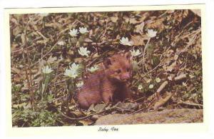 Baby Fox, 40-60s