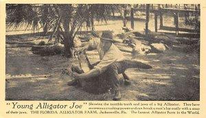 Young Alligator Joe Jacksonville, Florida, USA Alligator Unused