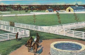 Kentucky Lexington Typical Blue Grass Stock Farm 1959