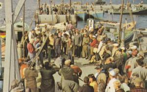 WEDGEPORT , Nova Scotia , Canada , 50-60s ; Tuna Fishing Wharf