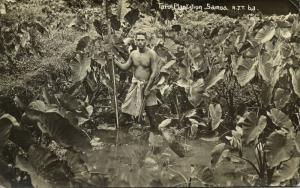 samoa, Native Man at Taro Plantation (1930s) RPPC