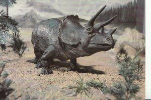 Animal Postcard - Triceratops - Rhino Like Herbivorous Dinosaur - Ref AB3019