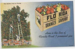 Florda Oranges