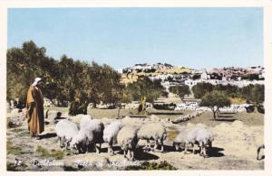 RP, Field Of Shepherds, Bethlehem, Palestine, Asia, 1920-1940s