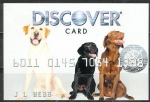USA 2008, Discover Card Advertising card - Labador Retrievers, unused