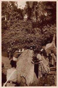 Ghana Gold Coast whole village moving a big tree Postcard