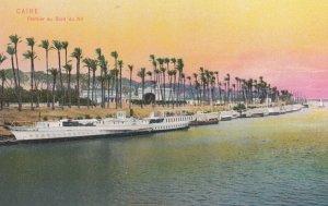 CAIRE , Egypt , 00-10s ; Palmier au Bord du Nil