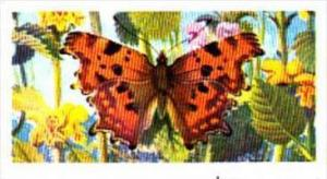 Brooke Bond Tea British Butterflies No 25 Comma