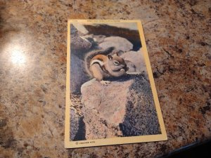 Vintage 1940's Greetings From A Little Friend Chipmunk Postcard