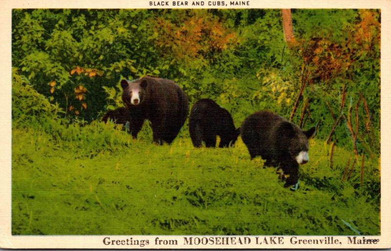 Maine Greetings From Greenville Moosehead Lake Region