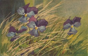 A. HALLER , Flowers , 00-10s