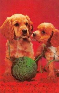 COCKER SPANIELS Puppies Yarn Dogs Greetings c1950s Vintage Postcard