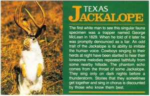 Texas Jackalope Tall Tale Humor with Caption on the Front Postcard 1980s