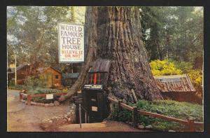 World Famous Tree House Lilly Redwood Park CA Unused c1950s