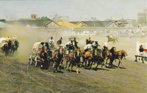 Chuckwagon Races, The Calgary Stampede, Calgary, Alberta, Canada, 1940-1960s