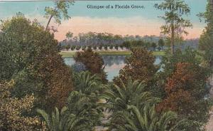 Florida Glimpse Of A Florida Grove