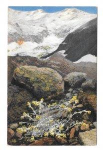 Alpenflora Artemisia Austria Otto Haus Nenke Ostermaier Serie 522 N 932 Postcard