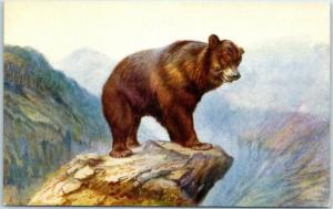 Vintage UK England Greetings Postcard Brown Bear on Mountain Peak J. Salmon