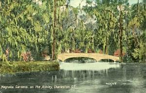 SC - Charleston, Magnolia Gardens on the Ashley River