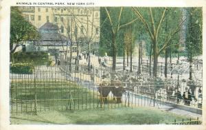 Animals in Central Park New York