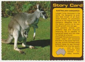 Story Card of the Kangaroo of Australia - pm 1985