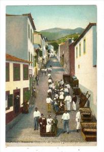 Caminho Do Monte, Descida De Carros, Madeira, Portugal, 1900-1910s