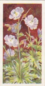 Brooke Bond Tea Trade Card Wild Flowers No 29 Meadow Cranesbill