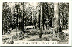 YOSEMITE NATIONAL PARK Calif. RPPC Photo Postcard Mariposa Grove of Big Trees