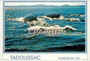 Postcard Modern Tadoussac Saguenay QC
