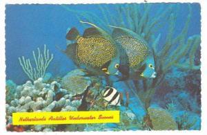 French Angelfish, Island Underwater Scenes,Netherland, Antilles,40-60s