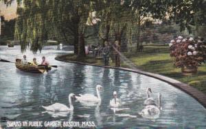 Swans in Public Garden , BOSTON , Massachusetts , 1908