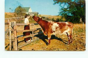 Old Vintage Postcards Maid Feeding Cow Farms # 1931A