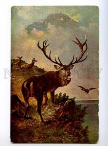 234665 HUNT DEER Duck by MULLER Vintage postcard